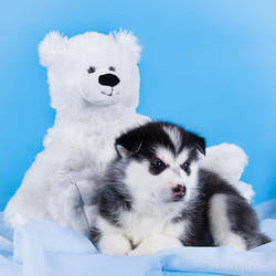 Cuteness by DeingeL-Dog-Stock