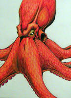 Octopus by BohunkLJH
