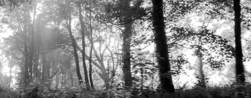 Black Fog by bebadawn