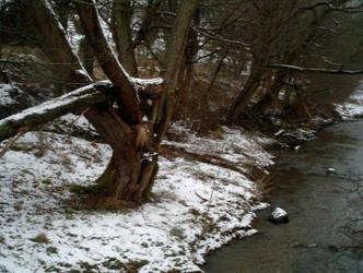 broken tree by whitelight-whiteheat