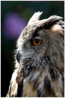 Eagle Owl Portrait by W0LLE