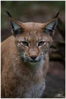 Lynx SB I by W0LLE