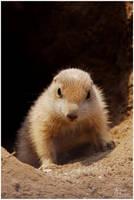 Am I cute . . . by W0LLE