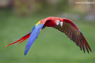 2018 - 11 Macaw by W0LLE