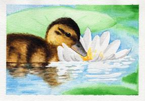 Happy duck by MiaErrianIrielynn
