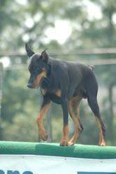Dog Stock 004 by Jaded-Night