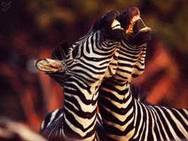 Zebras ( Smile ) by AppetiteForLove