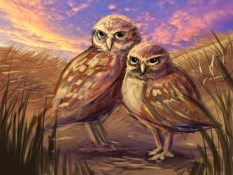 Burrowing Owls by kina