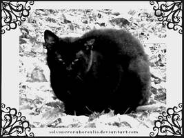 Black Familiar by solusauroraborealis