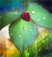 RAIN  ROSE.jpgINTERNET by mladylake
