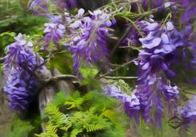 Wisteria Wildness.jpgINTERNET by mladylake