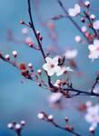 Spring Love III by cimengizem