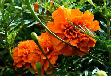 Orange by Imakegoodsushi