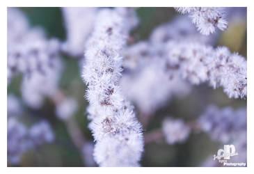 white autumn 2 by HyenArts