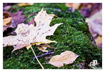autumn colors 2 by HyenArts