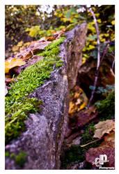 autumn colors 3 by HyenArts