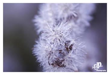 white autumn 3 by HyenArts