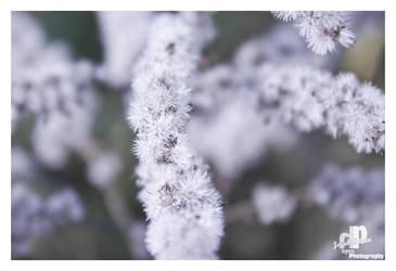 white autumn 4 by HyenArts