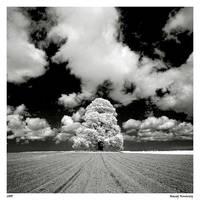 Tree IR by Maciej-Koniuszy