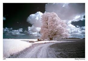 Fairytale world_7 by Maciej-Koniuszy