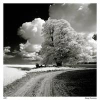 Old linden by Maciej-Koniuszy