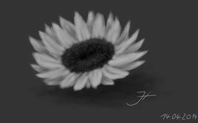 Sunflower Study by janey-in-a-bottle