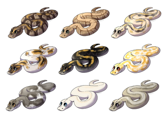 ball pythons by Kaliner123