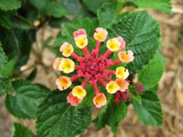 Flower Rink by HA91