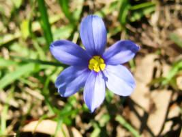 Weed Flower by HA91
