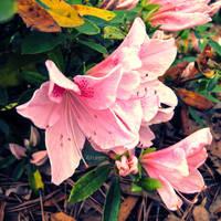 Bringing Spring by HA91