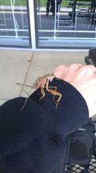 Praying Mantis by ShinningArceus