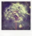 dandelion . pola by smokedval