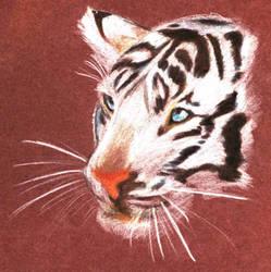 White Tiger-Cub by sombrepardon