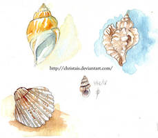 Coquillages by ChrisTais