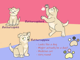 Buttercupbark Ref Sheet by Rabies-the-Squirrel