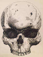 Skull in Pen and Ink by JTRIII