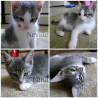 Neville + Luna - 9 weeks by irishgirl982