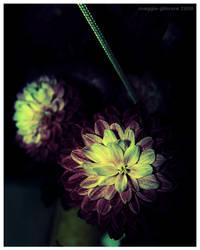 Night Bloom by meg2101