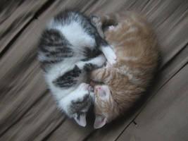 amazing kittens by kerodragons