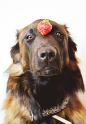 Strawberry by Zolfyer