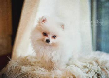 Mister Adorable by kittynn