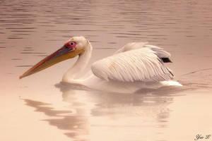 misty pelican by Yair-Leibovich