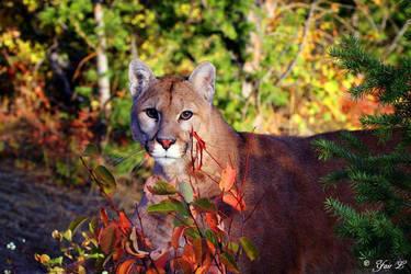 Cougar by Yair-Leibovich