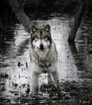 wolf muddy games by Yair-Leibovich