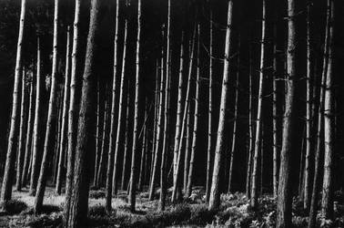 Oblique Trees by AdamskiPhoto