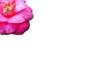 Peeking Flower by elsnaibs