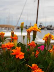 Barcos y flores by LautaroVincon