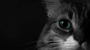 Emerald eyes by LautaroVincon