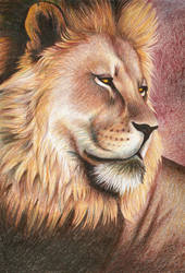 Lion by Jennifurret