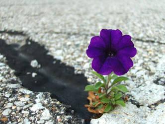 Perseverance by Jennifurret